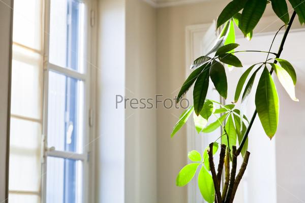 Комнатное растение в белой квартире