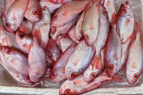 Фотография на тему Свежая рыба на местном рынке