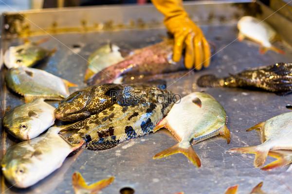 Свежая рыба на местном азиатском рынке