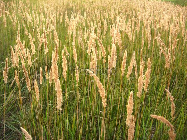 Заросли высокой зеленой травы