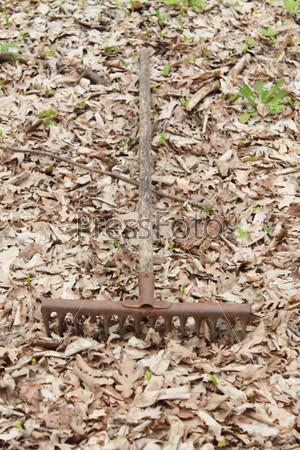 Старые грабли на листве