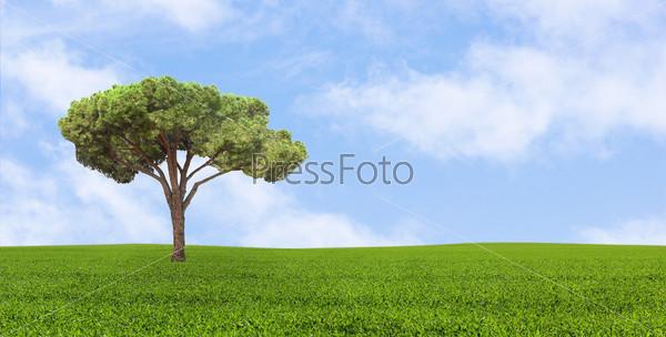 Зеленое одинокое дерево, растущее в поле