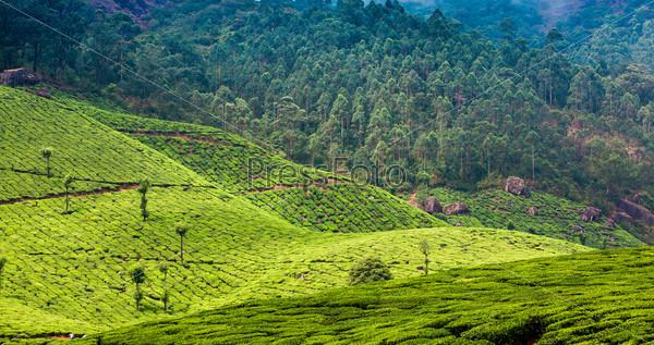 Фотография на тему Чайные плантации в Индии