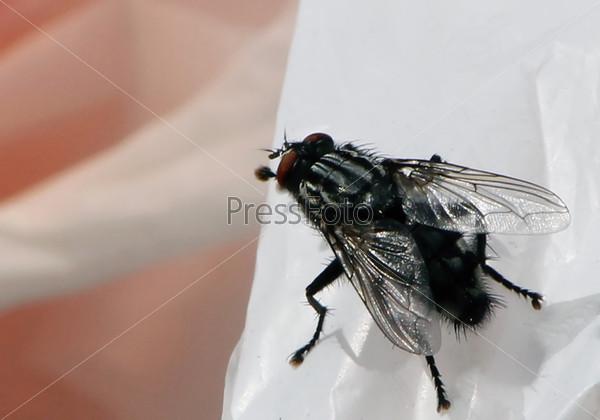 Черная муха на асфальте