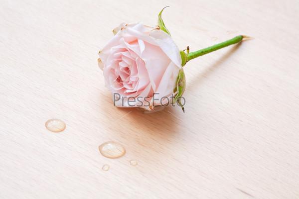 Фотография на тему Розовая роза и капли на деревянном фоне