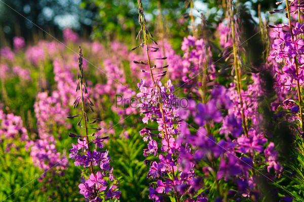 Фотография на тему Различные полевые цветы и травы