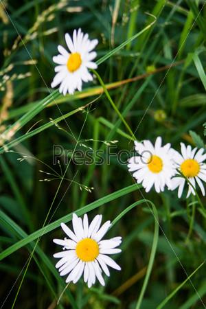 Различные полевые цветы и травы