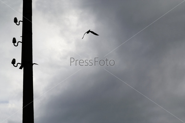 Силуэт чайки