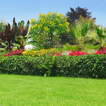 Цветущие клумбы в парке