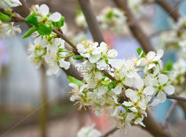 Молодые цветы на дереве