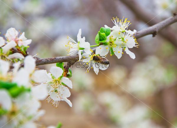 Молодые цветы и пчелы