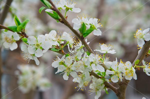 Фотография на тему Молодые цветы на дереве