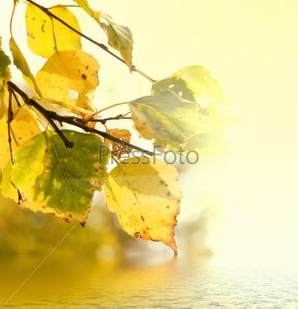 Фотография на тему Желтые листья березы