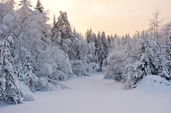 Небольшое лесное озеро в снегу и заснеженные ели