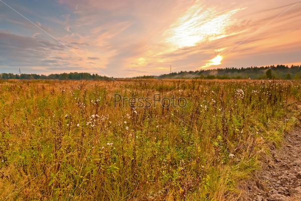 Дикое поле в Центральной России на рассвете