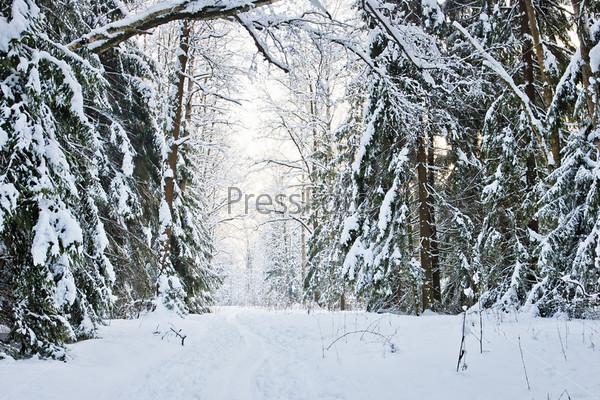 Зимняя дорога в снежном лесу