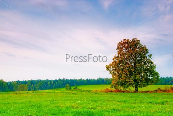 Красивое дерево в поле на фоне облачного неба