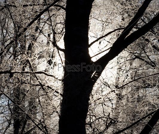 Фотография на тему Зимний закат