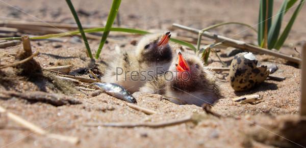 Симпатичные птенцы