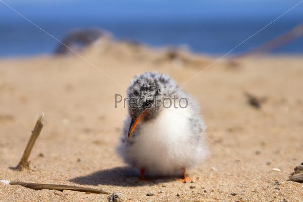 Фотография на тему Симпатичный птенец