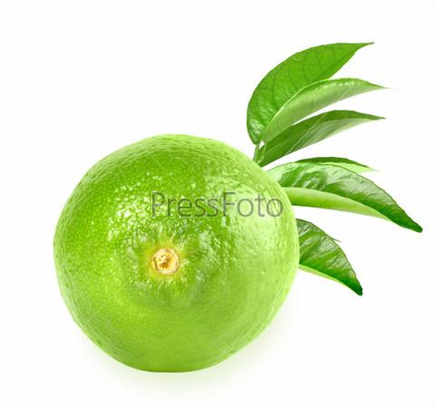 Свежий лайм и зеленый лист