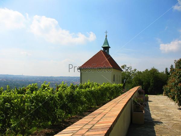Виноградник в районе Троя на севере Праги