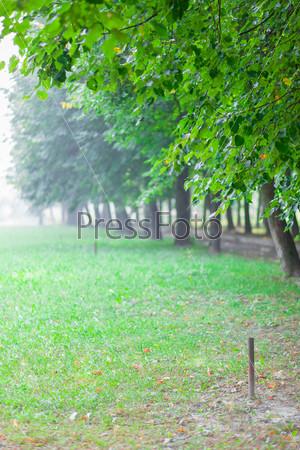 Зеленая аллея в тумане в утреннем парке