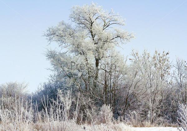 Покрытые снегом деревья в лучах полуденного солнца