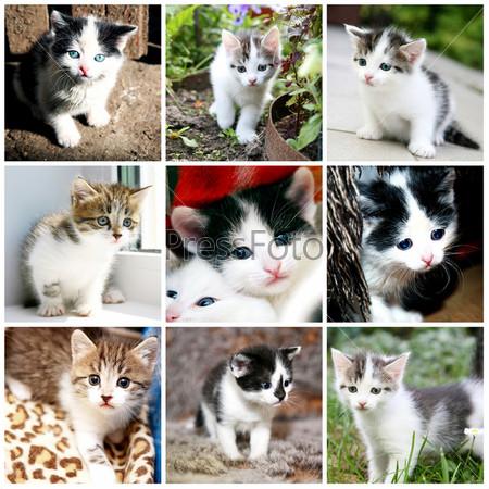 Фотография на тему Коллекция смешных котят
