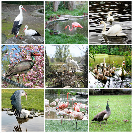 Коллаж из разных птиц
