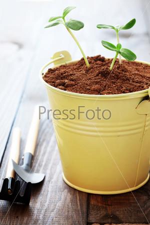 Фотография на тему Растения