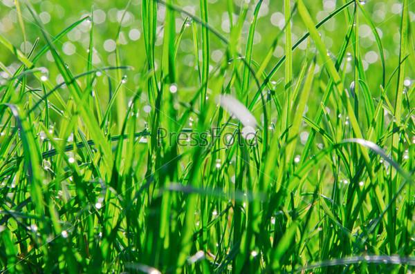 Трава с росой
