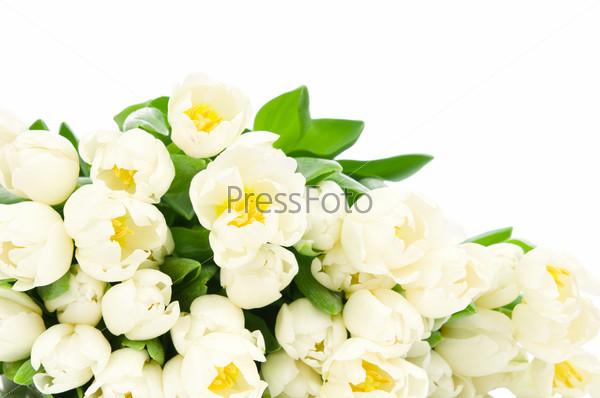 Букет из тюльпанов, изолированный на белом фоне