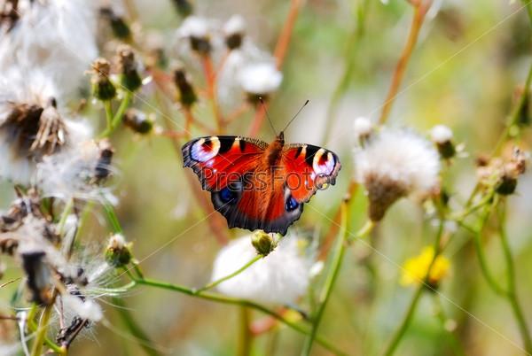 Фотография на тему Бабочка