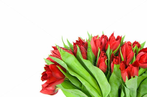 Букет из тюльпанов в вазе, изолированный на белом фоне