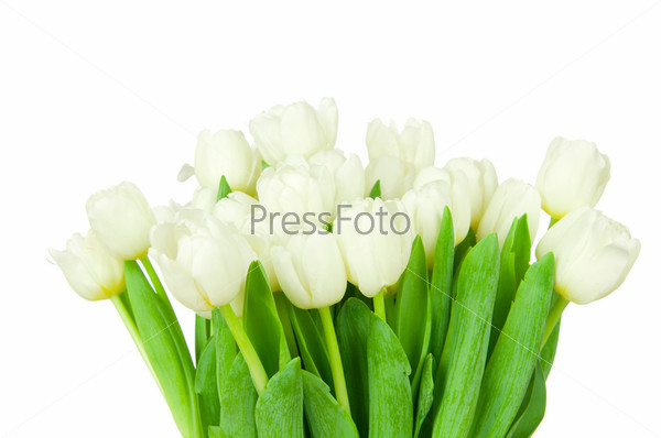 Фотография на тему Букет тюльпанов, изолированный на белом фоне
