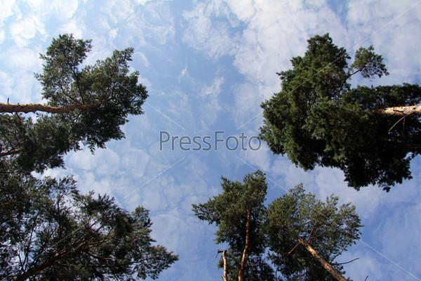 Окруженный деревьями