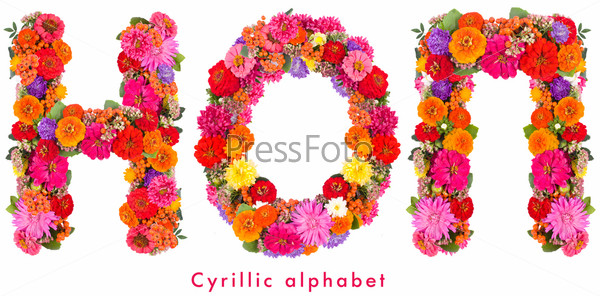 Фотография на тему Буквы алфавита из цветов, изолированные на белом