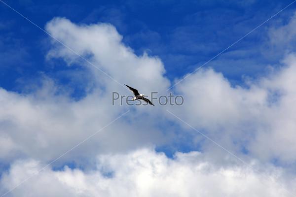 Фотография на тему Птицы в облаках