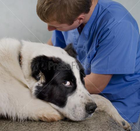 Ветеринар делает осмотр