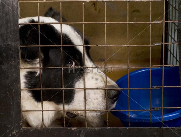 Собака сидит в клетке