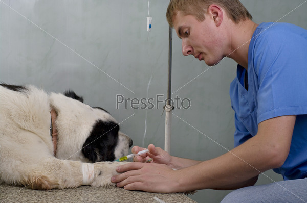 Фотография на тему Ветеринар делает инъекцию