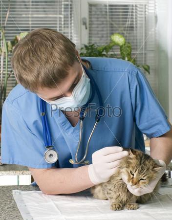 Ветеринар лечит больную кошку