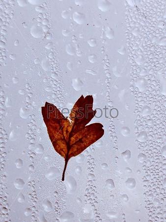 Листок на мокром окне