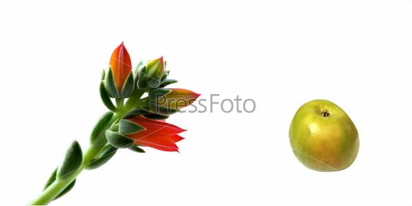 Маленькие цветочки и зеленое яблоко