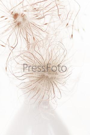 Фотография на тему Белые цветки