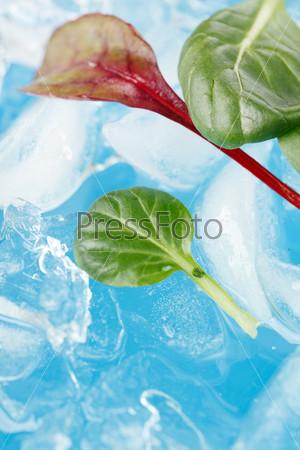 Лед и листья