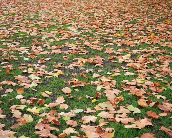 Осенний сезон в лесу