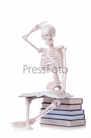 Фотография на тему Скелет читает книги на белом фоне