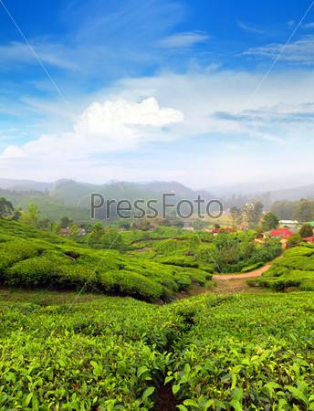 Горная чайная плантация в Индии